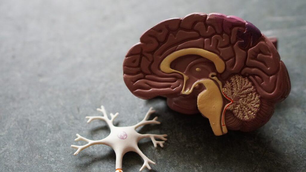 parts of the brain eft-how does eft work