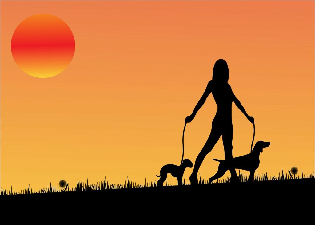 sunset, dog, dogs, personal growth